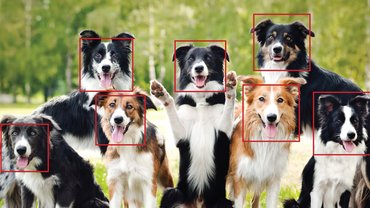This Girl To Develop An AI System To Detect & Follow Street Dogs For Vaccination